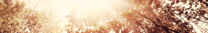 Autumn background clipped